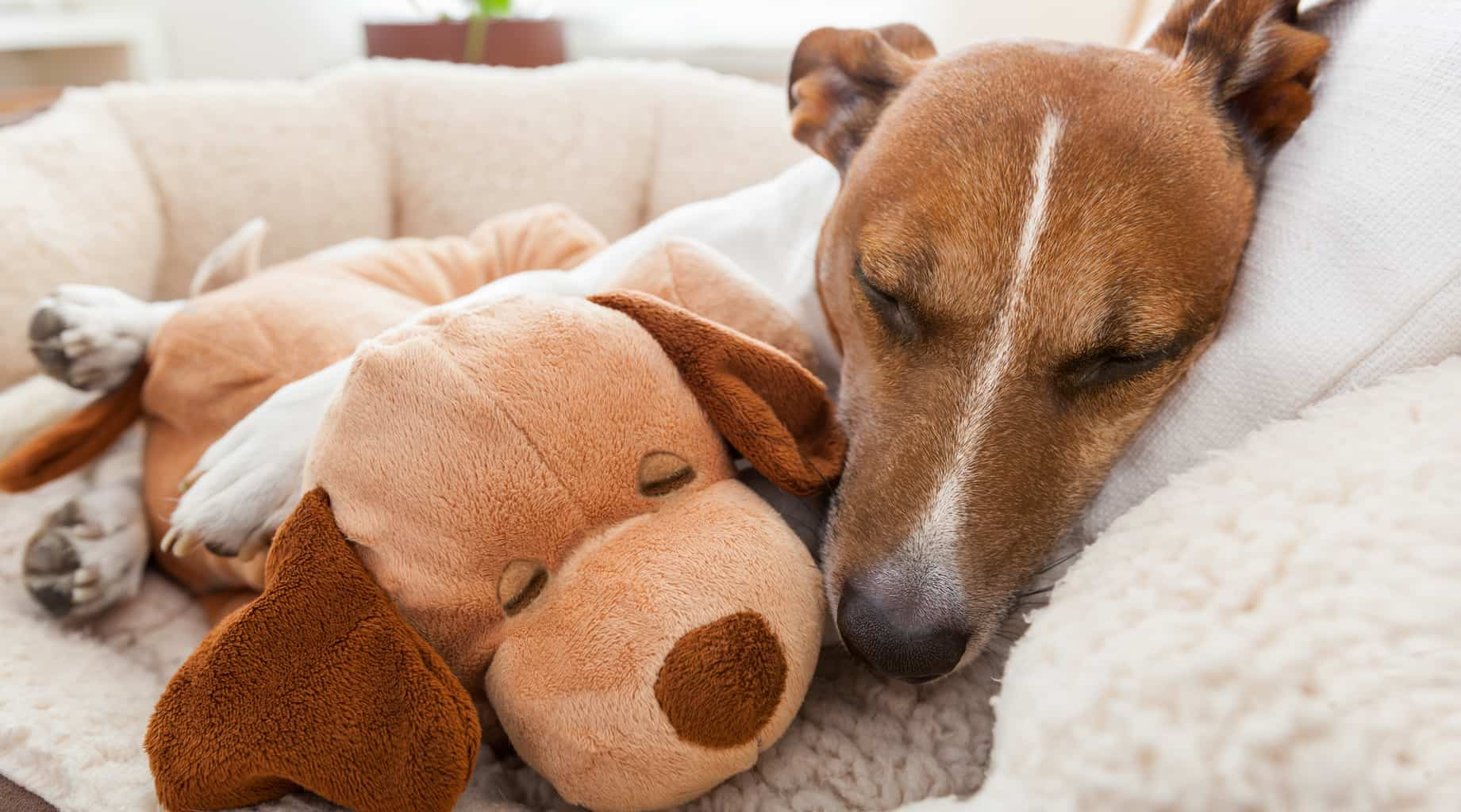 What are The Essential Needs of a Dog? | Four Long Legs