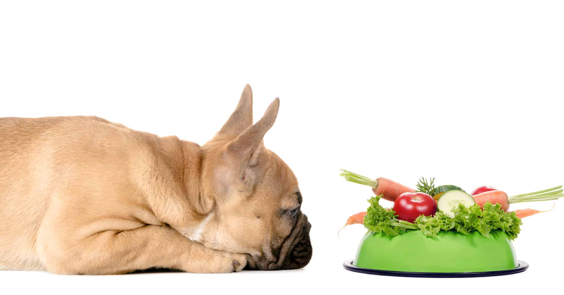 Are Freshly-Cooked Meals the Future of a Healthy Dog's Diet? | Four Long legs