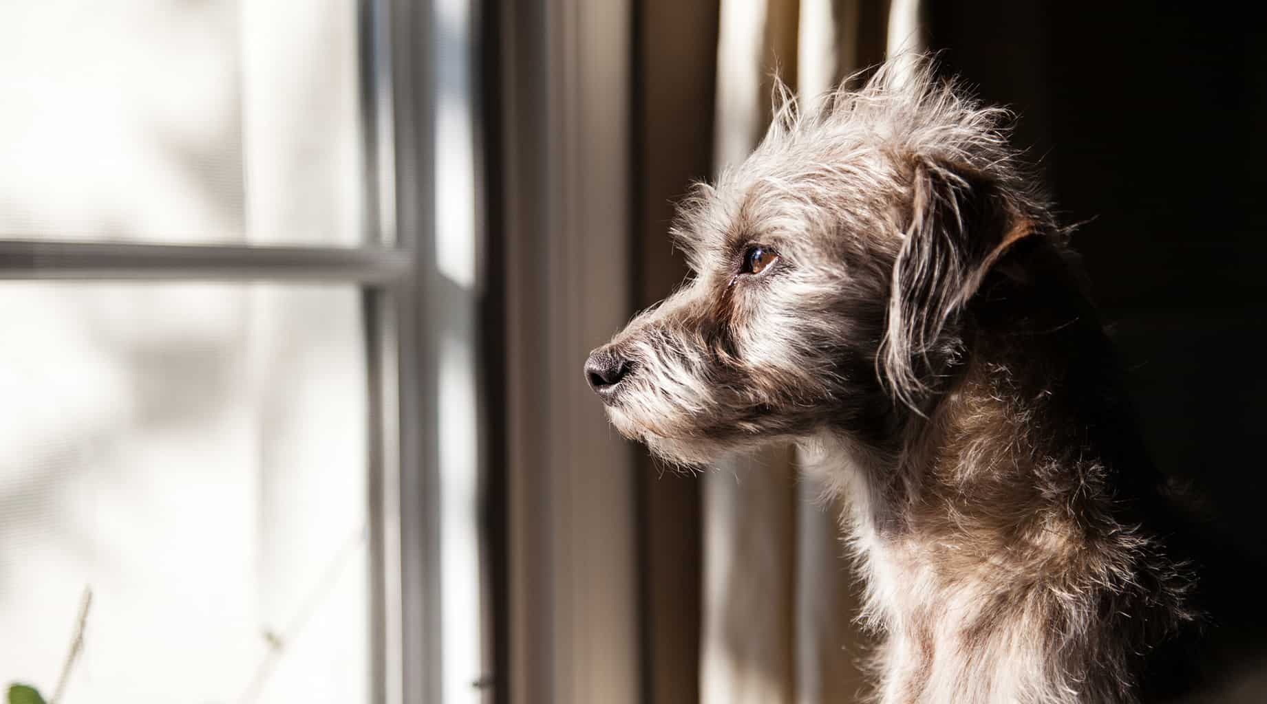 How to Help A Dog With Separation Anxiety | Four Long Legs