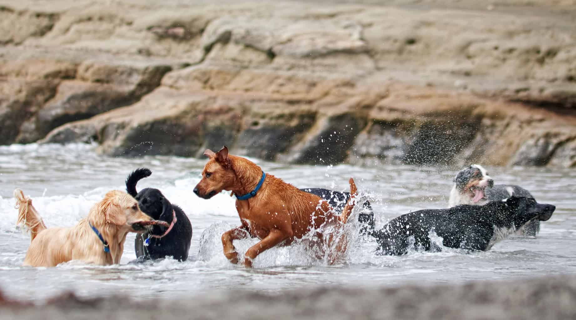 How To Introduce Your Dog To Unfamiliar Dogs Successfully | Four Long Legs