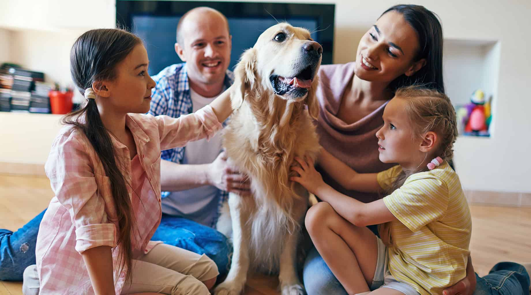 Good Reasons to Adopt an Older Dog | Four Long Legs