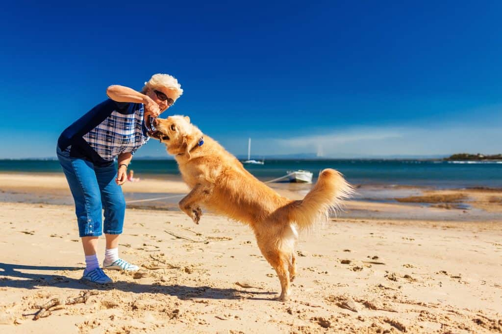 Dog having fun with it's owner on the beach