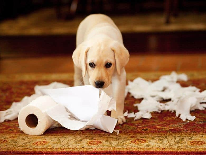 The iconic andrex puppy with toilet roll