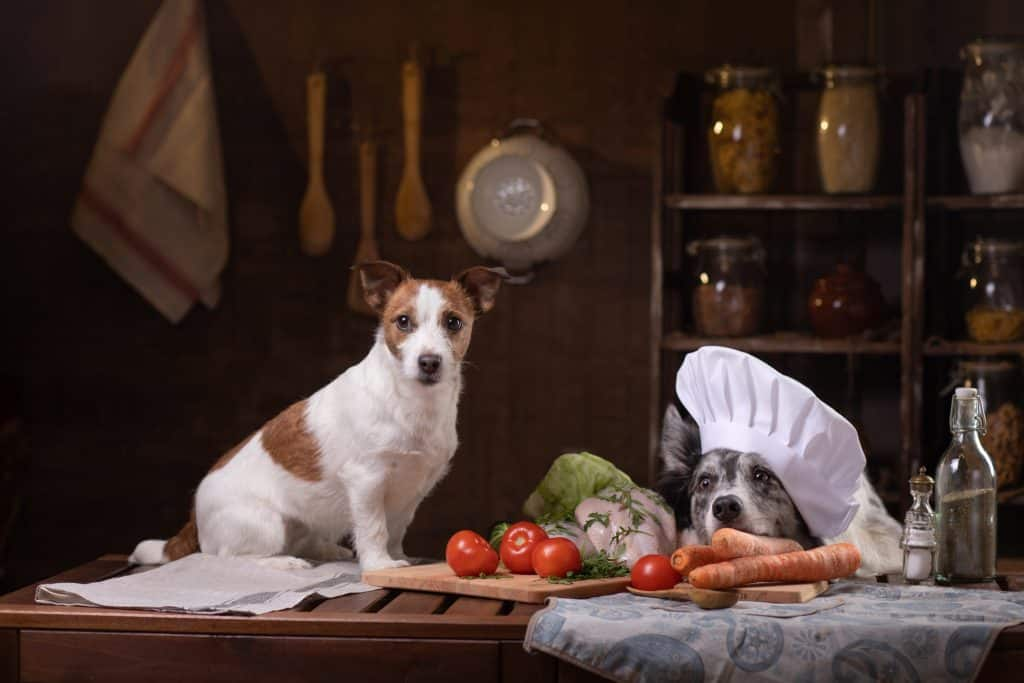 Jack Russell and Border Collie cooking in the kitchen.